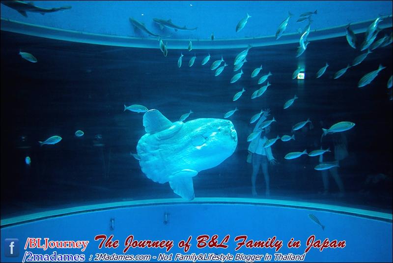 Japan - Yokohama Hakkeikima Sea Paradise - BLJourney (42)