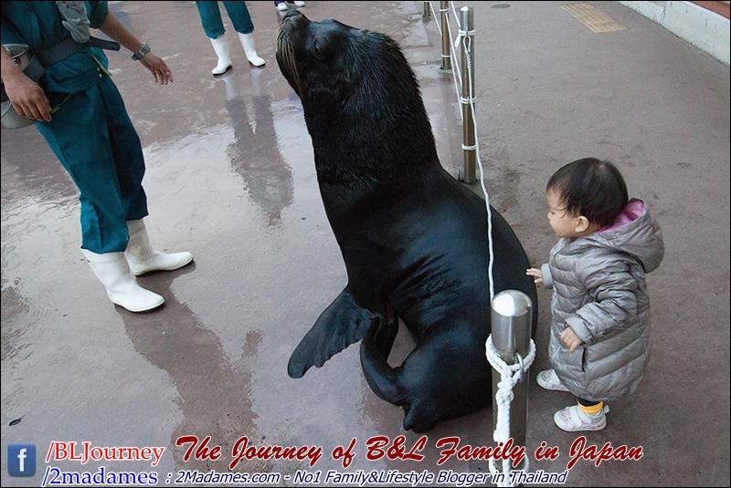 Japan - Yokohama Hakkeikima Sea Paradise - BLJourney (56)