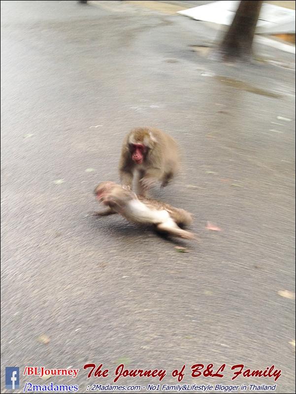 Japan_Kyushu_Fukuoka_Beppu_Takasakiyama monkey park_B&L Family_BLJourney  (2)