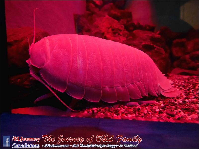 Japan_Kyushu_Fukuoka_Beppu_umitamago aquarium_B&L Family_BLJourney  (1)