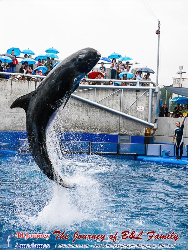 Japan_Kyushu_Fukuoka_Beppu_umitamago aquarium_B&L Family_BLJourney  (11)