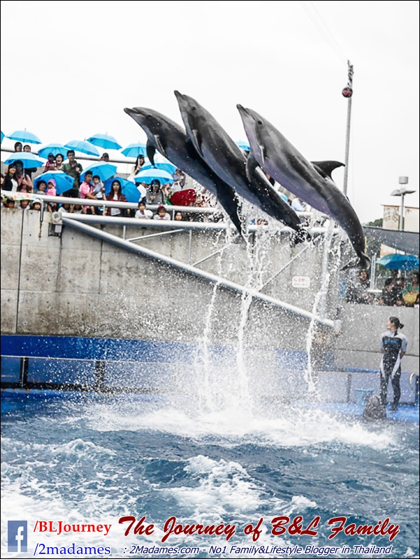 Japan_Kyushu_Fukuoka_Beppu_umitamago aquarium_B&L Family_BLJourney  (12)