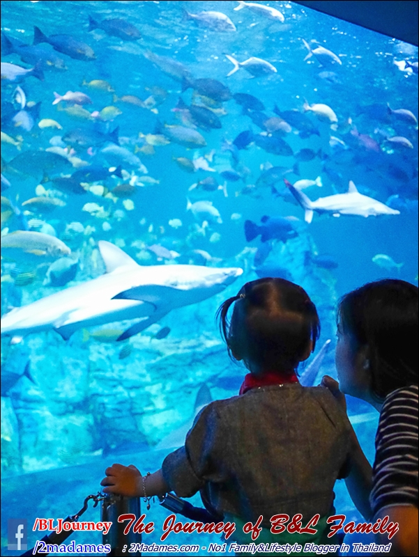 Japan_Kyushu_Fukuoka_Beppu_umitamago aquarium_B&L Family_BLJourney  (13)