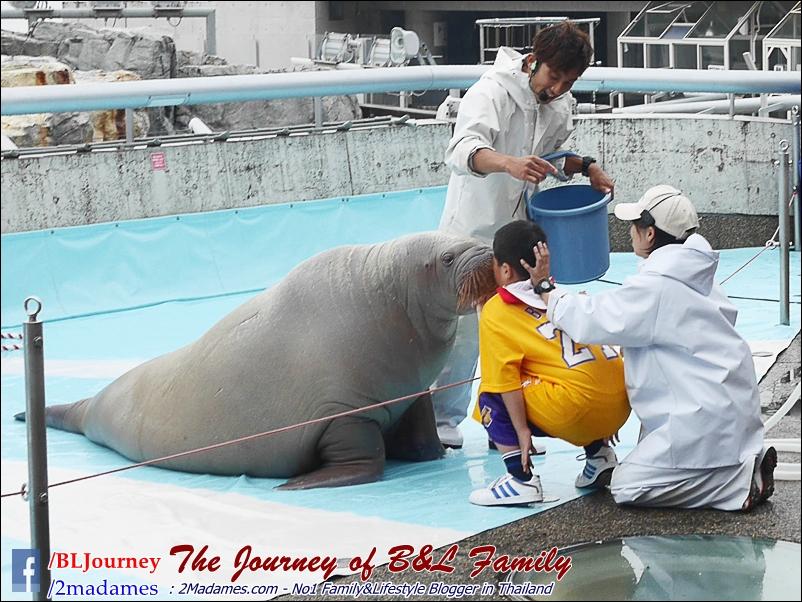Japan_Kyushu_Fukuoka_Beppu_umitamago aquarium_B&L Family_BLJourney  (25)