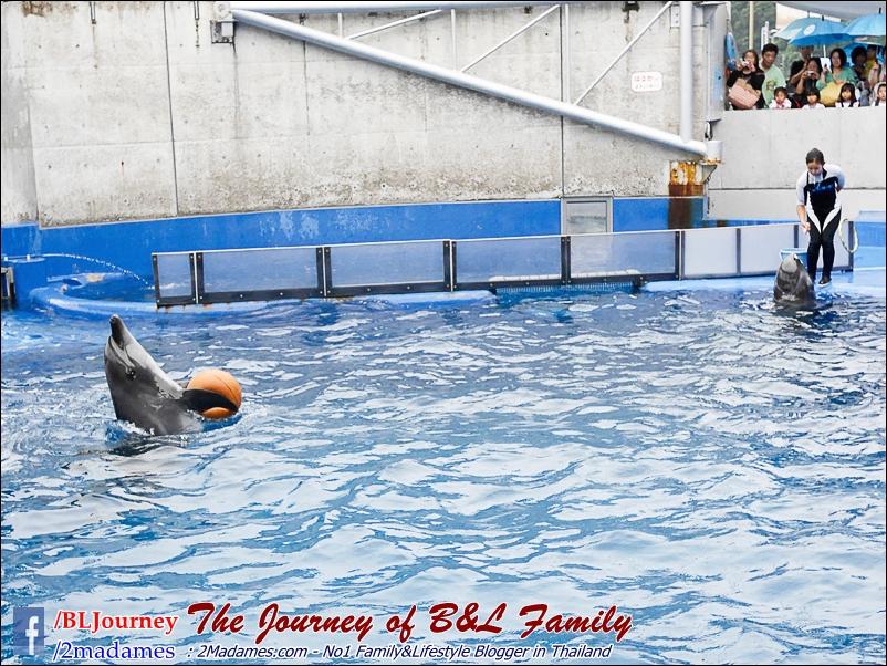 Japan_Kyushu_Fukuoka_Beppu_umitamago aquarium_B&L Family_BLJourney  (32)