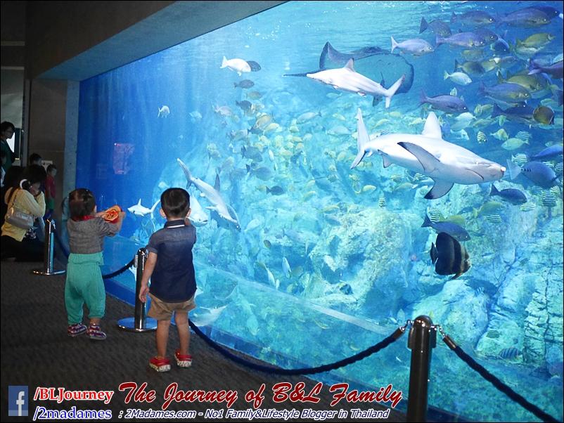 Japan_Kyushu_Fukuoka_Beppu_umitamago aquarium_B&L Family_BLJourney  (36)