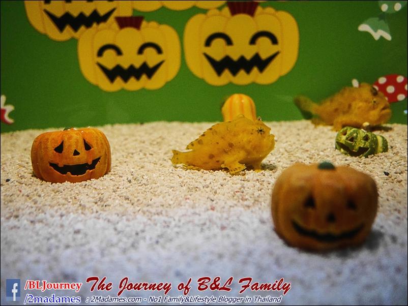 Japan_Kyushu_Fukuoka_Beppu_umitamago aquarium_B&L Family_BLJourney  (37)