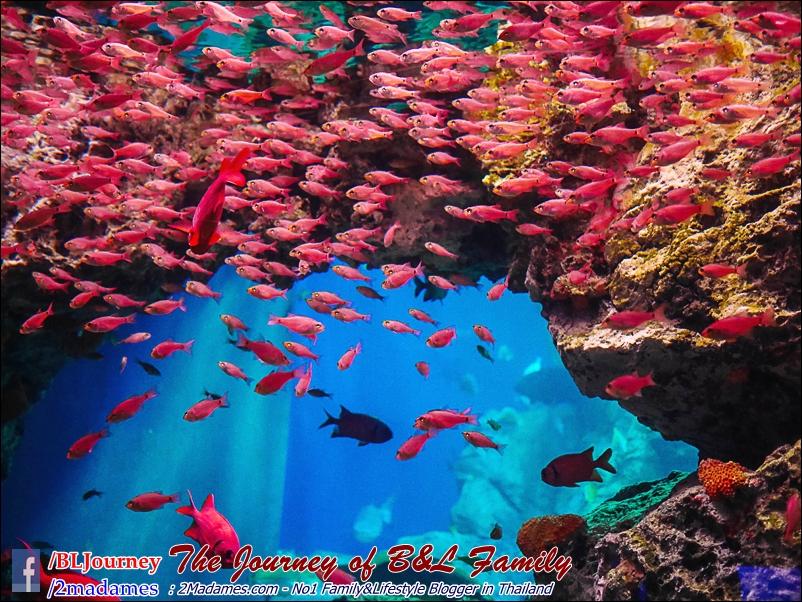 Japan_Kyushu_Fukuoka_Beppu_umitamago aquarium_B&L Family_BLJourney  (44)