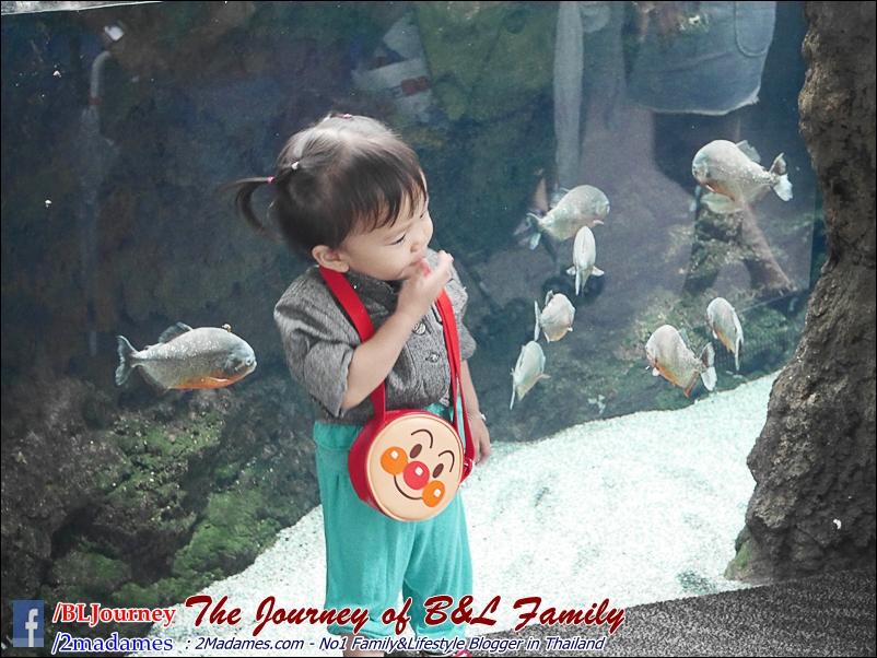 Japan_Kyushu_Fukuoka_Beppu_umitamago aquarium_B&L Family_BLJourney  (50)