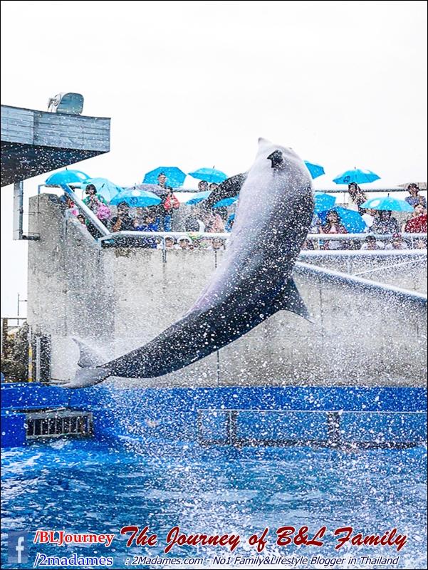Japan_Kyushu_Fukuoka_Beppu_umitamago aquarium_B&L Family_BLJourney  (8)