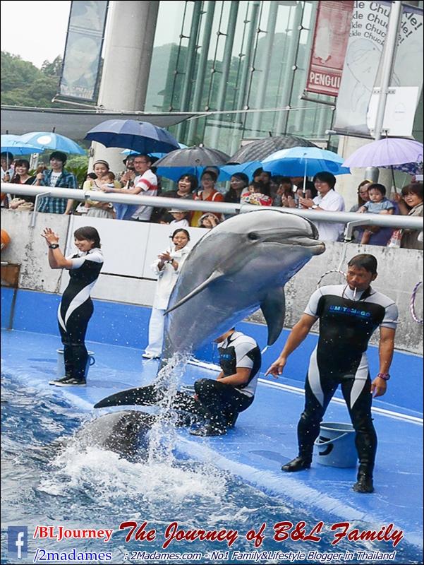 Japan_Kyushu_Fukuoka_Beppu_umitamago aquarium_B&L Family_BLJourney  (9)