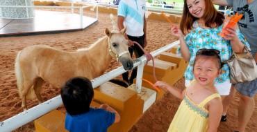 Pipo Pony Club Pattaya, ปีโป้ โพนี่ คลับ, ฟาร์มม้าแคระ พัทยา, ที่เที่ยวใหม่ 2014, สถานที่ท่องเที่ยวสำหรับครอบครัว, รีวิว, review, pantip
