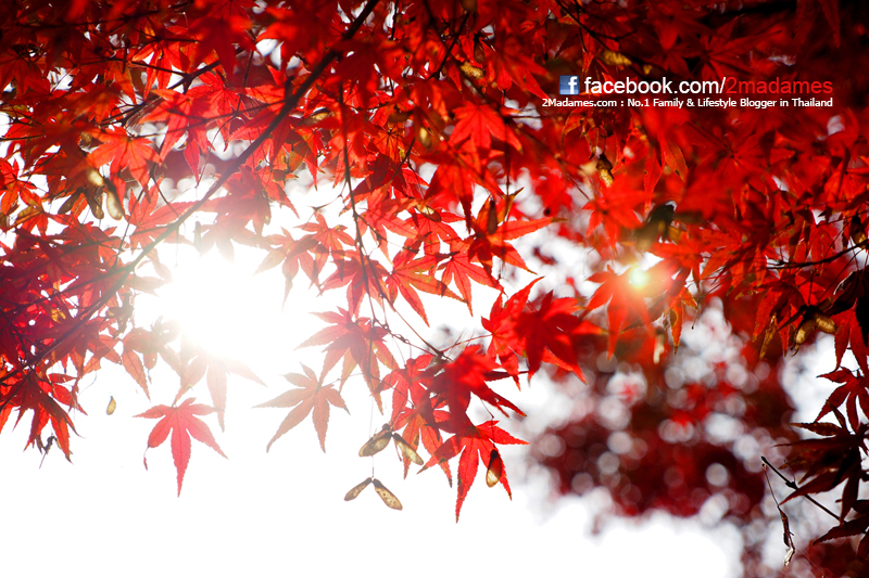 เที่ยว Saga, เที่ยว Ureshino, เที่ยว Sasebo, รีวิว, review, pantip, โรงงาน Ichiran Ramen, Yutoku Inari Shrine, Warakuen Ryokan, Kujukushima Pearl Sea Resort, ล่องเรือโจรสลัดอ่าว Sasebo, Huis Ten Bosch, The Kingdom of the light, ไร่สตอเบอร์รี่เมือง Tanushimaru, Kura Sushi, Tempura Daruma, Hilton Fukuoka, Tocho-ji Temple, Fukuoka Tower, Fukuoka Washington Hotel
