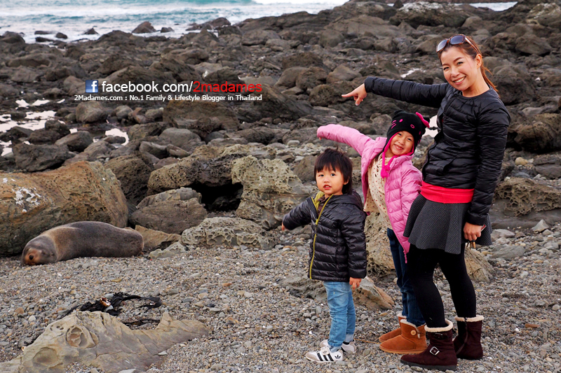 Picton,Havelock,Marlborough,Kaikoura,Whale Watch, The Mussel Pot, The Vines Village,pantip,รีวิว