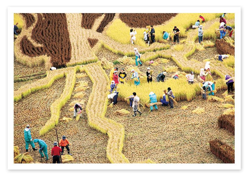 Inakadate Village,Aomori,ภาพศิลปะบนนาข้าว,ที่เที่ยวญี่ปุ่น คนไทยไม่รู้จัก,pantip,รีวิว,อินาคะดาเตะ,ทันโบะอาร์ต