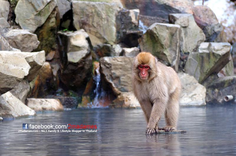 เที่ยวกุนมะด้วยตัวเอง,เที่ยว Gunma ด้วยตัวเอง,Kusatsu Onsen,Takaragawa Onsen,รีวิว,ราคา,pantip,minakami,ลิงหิมะแช่ออนเซ็น,ช็อปปิ้งญี่ปุ่น,Jigokudani Monkey Park,การเดินทาง,มินาคามิ ญี่ปุ่นเก็บสตอเบอรี่ที่ฟาร์ม Dole Land,Takumi no Sato,Kizuna Sushi,การจอง hotelscombined,donquijote,ดองกี้,วัดดารุมะจิ แห่งเซียวรินซัน,เนื้อJoshu Wa,ichiran ramen,ขนมไดฟูกุไส้สตอเบอรี่ในตำนาน,Pepe,GU,Uniqlo,Hotel Gracery Shinjuku,Tenjin Lodge,ร้านขายยา ญี่ปุ่น,Daikoku Drug