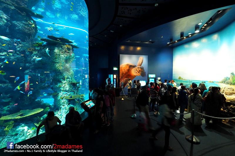 Halloween Horror Nights,Universal Studios,เที่ยวสิงคโปร์,Singapore,รีวิว,pantip,Sentosa,Ocean Suite,Equarius Hotel,Vertical SkyWalk,Jumbo seafood gallery,SONG FA BAK KUT THE,Henderson Wave Bridge,Fort Canning,S.E.A. Aquarium,สิทธิประโยชน์จากบัตรเครดิตแอร์เอเชีย ธนาคารกรุงเทพ,Merlion,Curate,วัดพระเขี้ยวแก้ว,Buddha Tooth Relic,Yum cha china town