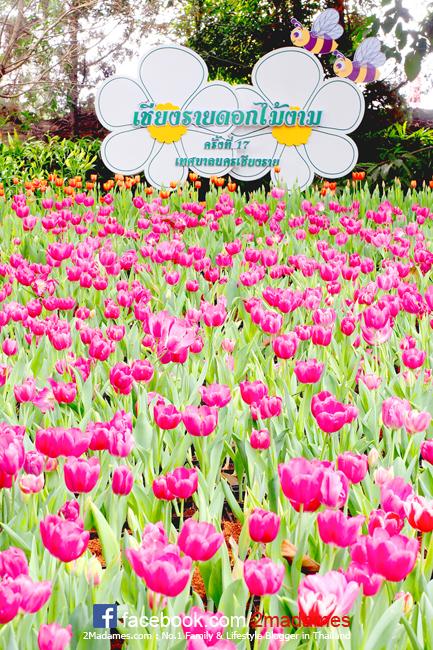 The Riverie by Katathani,เดอะ ริเวอร์รี บาย กะตะธานี,รีวิว,ราคา,pantip,งานดอกไม้สวนตุงและโคม,เชียงราย, Village of illumination,สิงห์ปาร์ค,ไร่บุญรอด,Singha Park,ร้าน China Garden at The Riverie